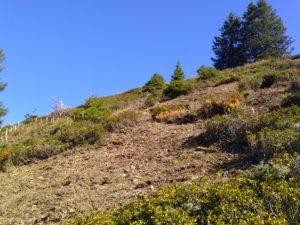 habitats tétras débroussaillé
