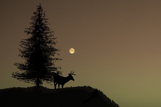 Cerf de nuit